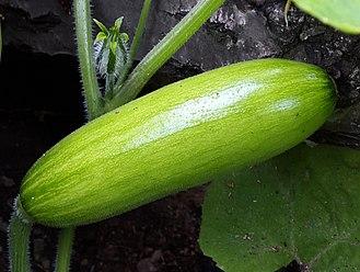 Cucurbita moschata - Image: Aehobak (cropped)