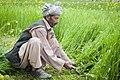 Afghan farmer in Bamyan.jpg