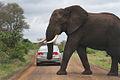Africa Safari 007 (5265684265).jpg