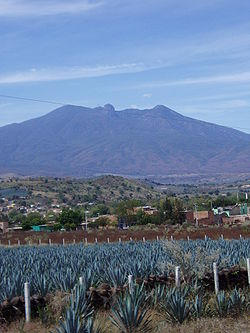 Agave fields mountain.jpg