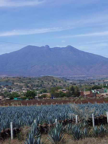 File:Agave fields mountain.jpg