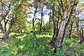 Ahlenmoor 2014 by-RaBoe 086.jpg