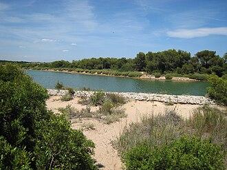 Albufera - Vegetation of the Parque Natural de la Albufera.
