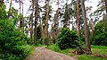 Aleksin, Tula Oblast, Russia - panoramio (105).jpg