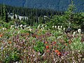 Alpine flowers (6123669675).jpg