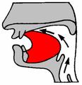 Alveolar.png