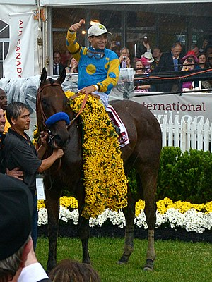 Triple Crown of Thoroughbred Racing (United States) - American Pharoah, the 12th and latest winner, at the 2015 Preakness Stakes