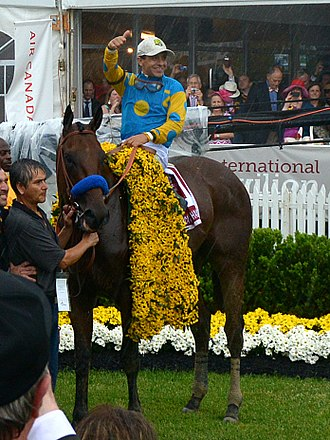 American Pharoah - American Pharoah after winning the 2015 Preakness Stakes