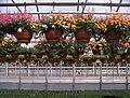 Ampelpflanzen - panoramio.jpg
