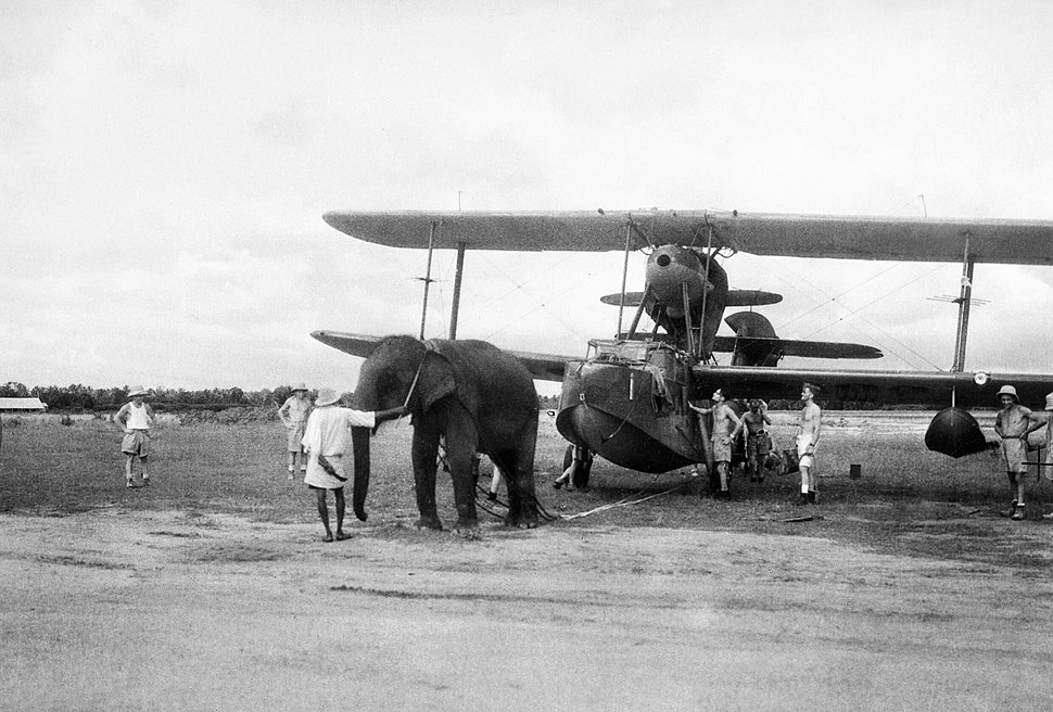 An elephant pulling a Supermarine Walrus aircraft into position at a Fleet Air Arm station in India, June 1944. A24291