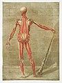 Anatomical illustration by Arnauld-Eloi Gautier-Dagoty , digitally enhanced by rawpixel-com 9.jpg