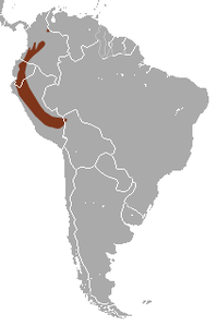 Andean Slender Mouse Opossum area.png