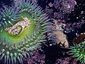 Anemone - Flickr - Dawn Endico.jpg