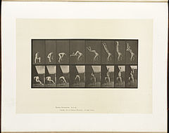 Animal locomotion. Plate 373 (Boston Public Library).jpg