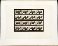 Animal locomotion. Plate 737 (Boston Public Library).jpg