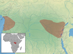 Anomalurus pusillus distribution (colored).png