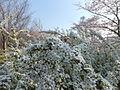 Aobanomori Park 20120409 004.jpg