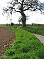 Approach to Wickmere from the north - geograph.org.uk - 780804.jpg