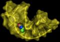 Aptamer biotin.png