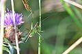 Araignées, insectes et fleurs de la forêt de Moulière (Les Chirons Noirs) (29011035466).jpg