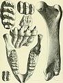 Archives du Mus©um d'histoire naturelle de Lyon (1878) (20139879219).jpg