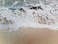 Arena y olas.jpg