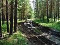 Argayashsky District, Chelyabinsk Oblast, Russia - panoramio (8).jpg