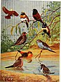 Articles about birds from National geographic magazine ((19-?)-(193-?)) (20613586849).jpg