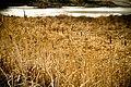 At Southworth Marsh (2420017463).jpg