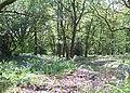 At the woodland edge - geograph.org.uk - 1306608.jpg