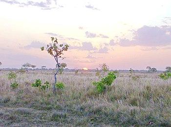 Atardecer en los Llanos de Gu%C3%A1rico
