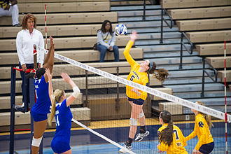 Texas A&M–Kingsville Javelinas - The Javelinas volleyball team in action against the Texas A&M–Commerce Lions in 2014