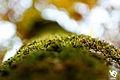Autumn (5131279051).jpg