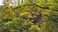 Autumn season in Butanic Garden فصل پاییز در باغ بوتانیکال تفلیس 22.jpg