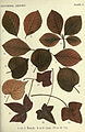 Autumnal leaves (Plate 2) (6796241615).jpg