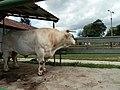 Býk - panoramio.jpg