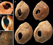 Plusieurs coquillages percés d'un trou