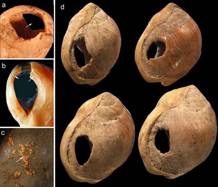 Cuentas de Nassarius kraussianus hallados en la Cueva de Blombos