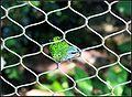 BIRDS PARADISE (7778144388).jpg