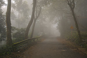 Ba Vì National Park, foggy road.jpg