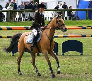 a horse wearing a running martingale