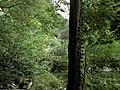 Banat,Nera Canyon - panoramio (11).jpg