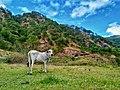 Bauko Peaks in Benguet - 13.jpg