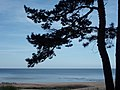 BeachTree - panoramio.jpg