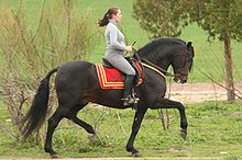 cheval espagnol taille