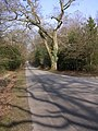 Beechwood Road at Beechwood House, New Forest - geograph.org.uk - 138457.jpg