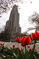 Behind Cathedral of Learning- Flowers Blooming (14100315765).jpg
