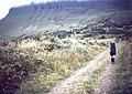 Ben Bulben - geograph.org.uk - 724689.jpg
