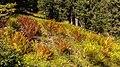 Bergweg van Burleun, naar Ladinas, Andiast. (actm) 17.jpg