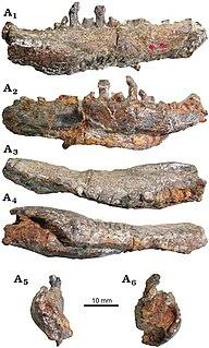 <i>Bienosaurus</i>